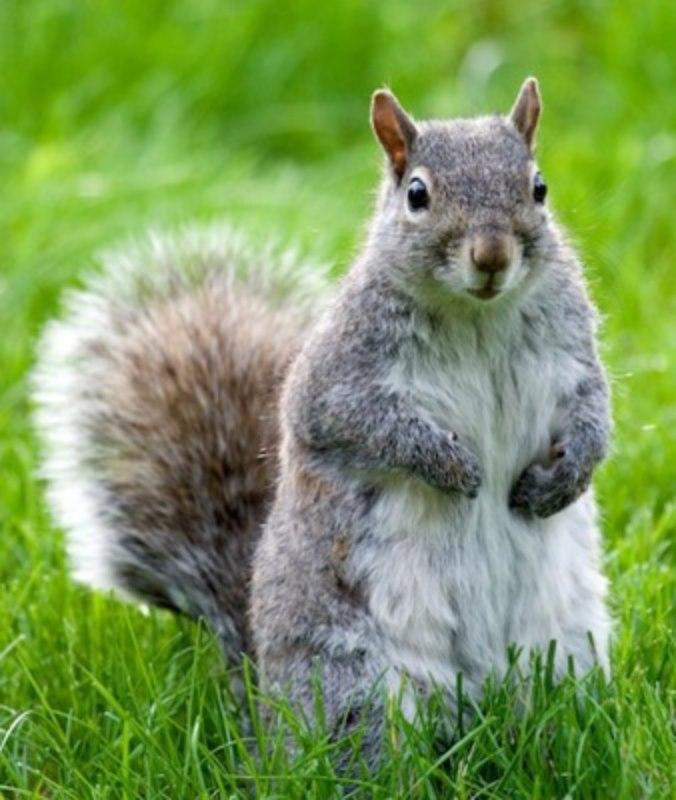 1 L'ecureuil