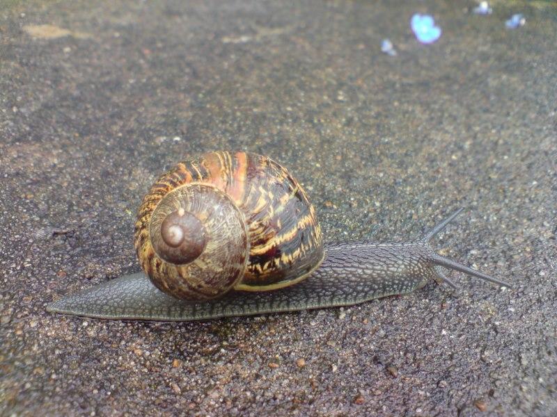 2 L'escargot