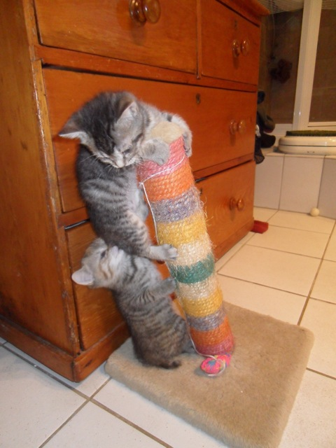 Petits chatons à donner