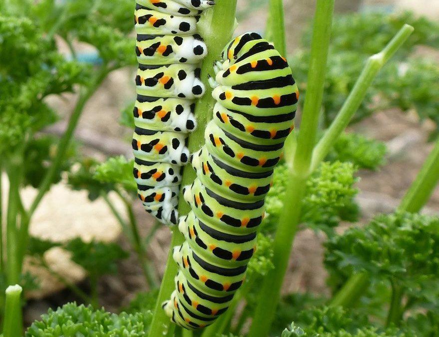 Au paradis des insectes