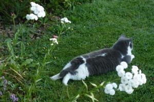 Grisli herbe et fleurs blanches
